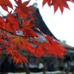 (20091122京都) 京都友人的紅葉祕徑:吉田神社、竹中稻荷神社、真如堂