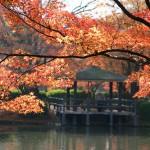 (20091127京都) 紅葉美景令人讚嘆的京都府立植物園