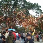 香港「大埔林村」的許願樹
