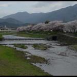 《愛戀京都》櫻花見の名所私推薦之一:高野川