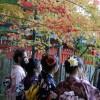 私の京都紅葉的走法 1:赤山禪院 - 曼殊院 - 詩仙堂