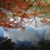 私の京都紅葉的走法 2:北野天滿宮 - 龍安寺 - 嵐山