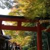 私の京都紅葉的走法 3:吉田神社 - 竹中稻荷神社 - 真如堂