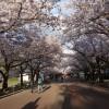 (201404) 日本關西春旅,第二次賞櫻的行程安排
